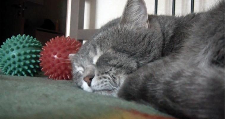 Крякающий кот из России стал героем интернета