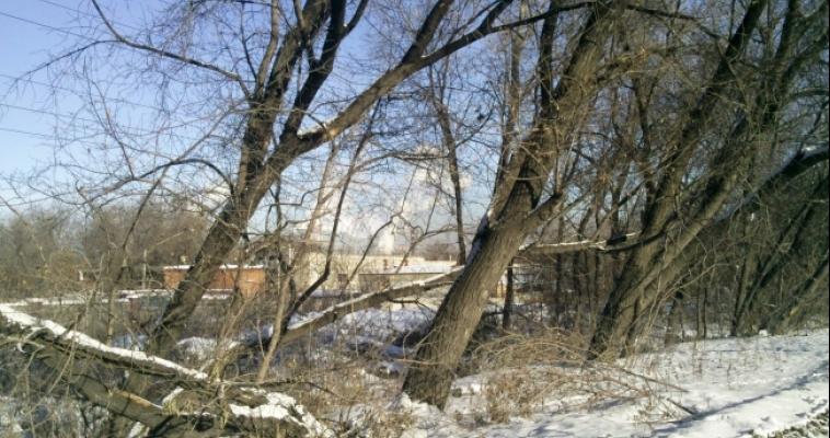 Южноуралец погиб после того, как на него упало дерево