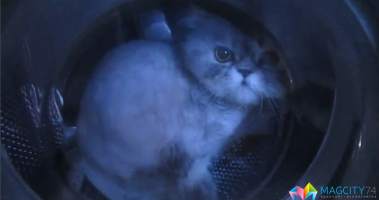 Девушке, «постиравшей» кота, грозит уголовная ответственность
