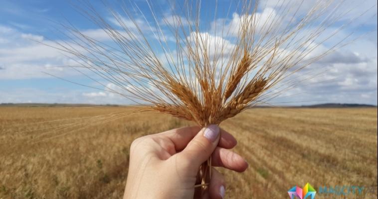 Меньше всего на складах осталось запасов ржи, гречихи и кукурузы