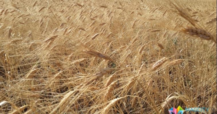 Зернохранилища области пустеют