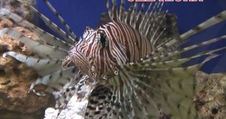 С 22 июня в ТРК «Гостиный двор» на 1 этаже будет проходить выставка рыб «Подводный мир»