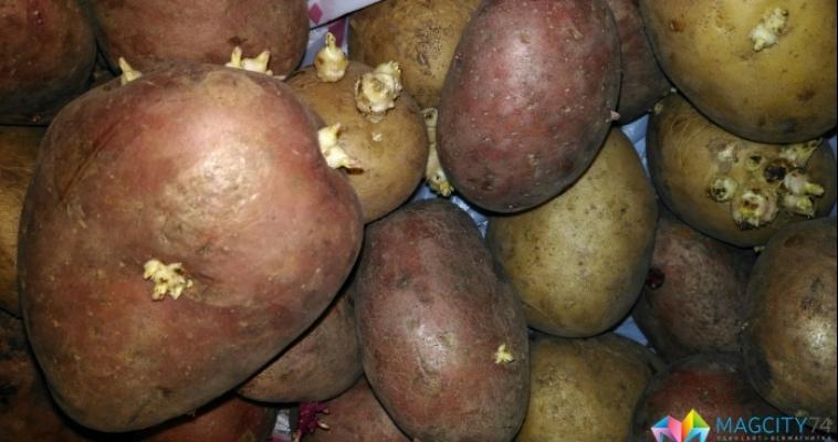 Цены на картофель вернулись на прежний уровень
