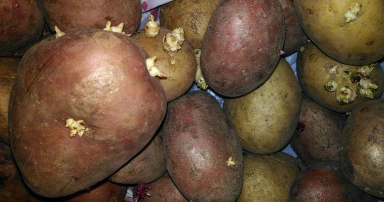 Южноуральцы стали меньше есть картофеля