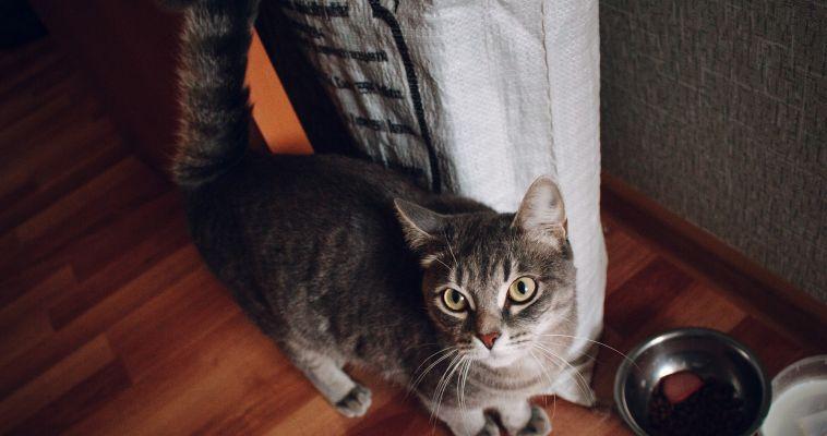 Домашние животные есть у 66% россиян