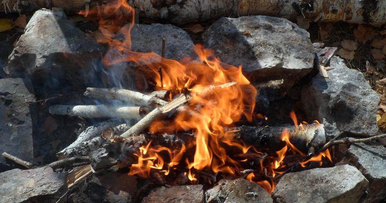 За год от пожаров в регионе погибло 882 га леса