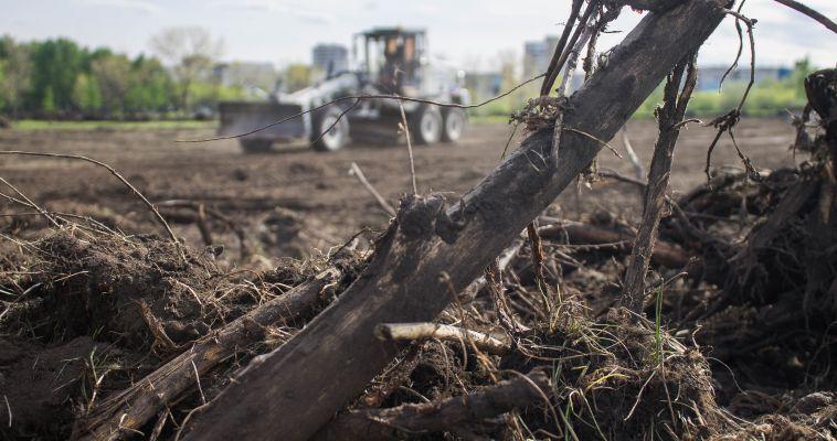 В парке Победы вырубили деревья. Зачем?
