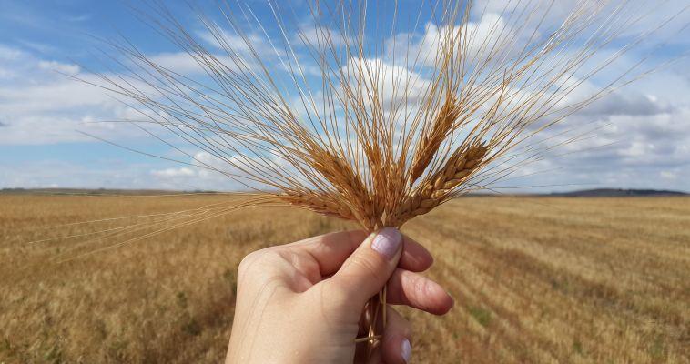 Зерна в области достаточно