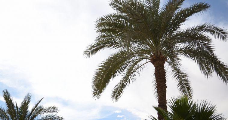 Отдыхающих в Саудовской Аравии предупреждают о вспышке вируса
