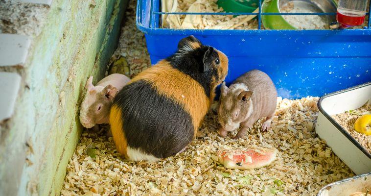 С миру по морковке. Экологическому центру  нужны лакомства для животных