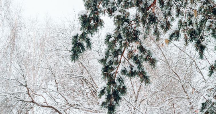 Все как у Пушкина. Магнитогорцев ждут по-настоящему зимние выходные