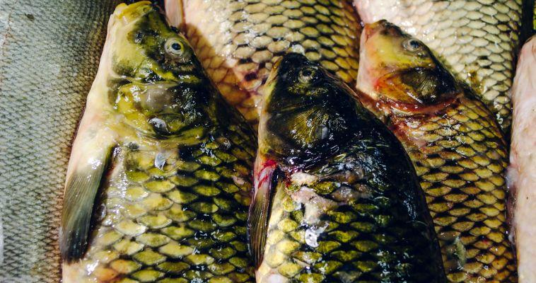 В сети рыбоохраны попали браконьеры