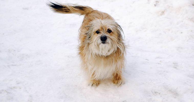 Собаки лучше воспринимают «детские голоса»