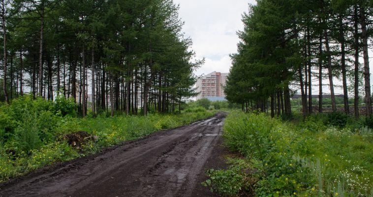 Сделаем вместе город зеленее. Магнитогорск участвует в конкурсе «Аллея славы»