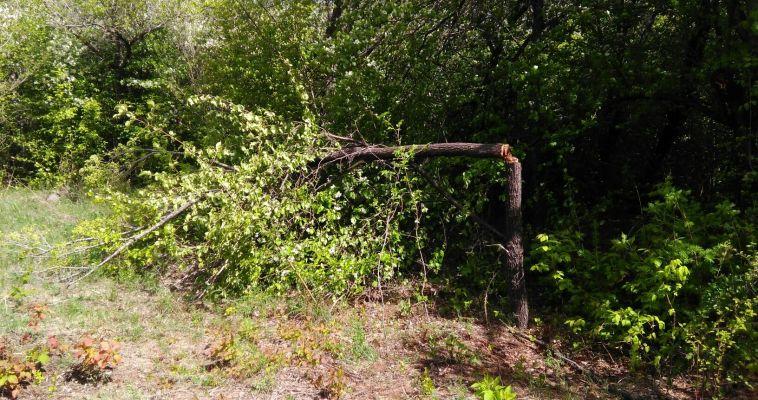 Магнитогорцев попросили не сажать деревья