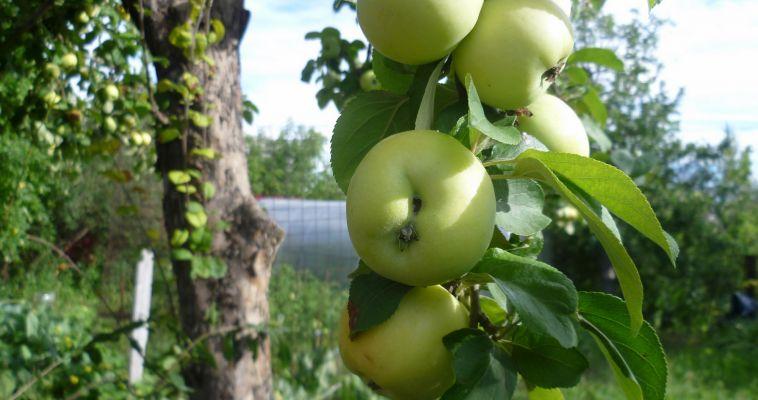 Заксобрание области утвердило День садовода