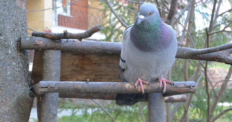 Птичий грипп заразен для человека