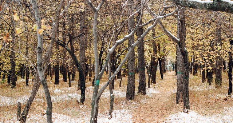 На Южном Урале прогнозируют сильный ветер и снег