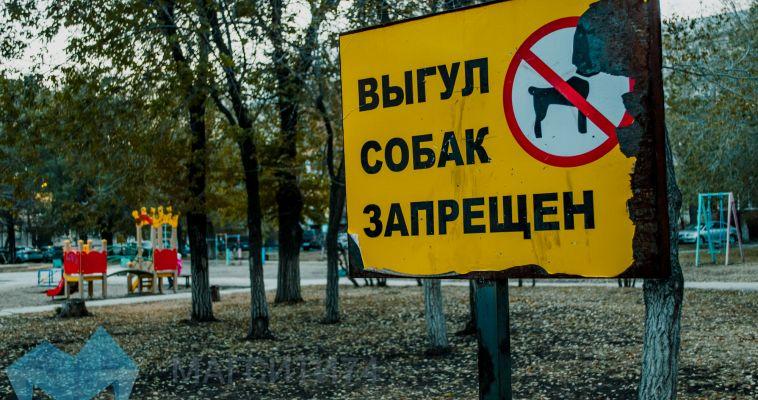 Магнитогорцы негодуют: собаки превращают город в общественный туалет