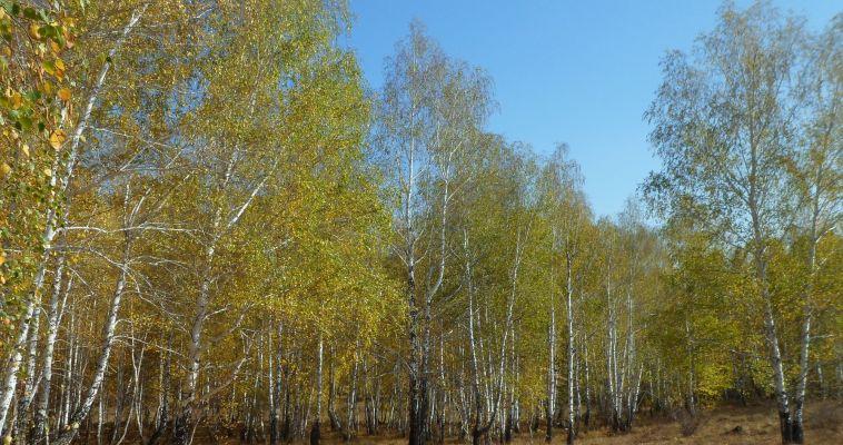 Воздух Магнитогорска будут спасать «зеленые щиты»