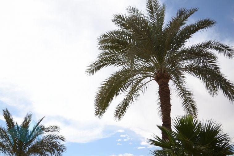 Прямые вылеты из Магнитки в ОАЭ отменили