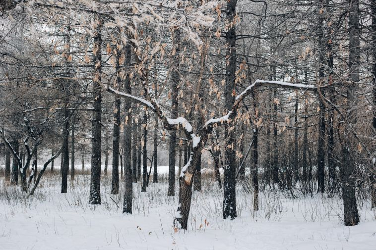 В городе - теплая зима