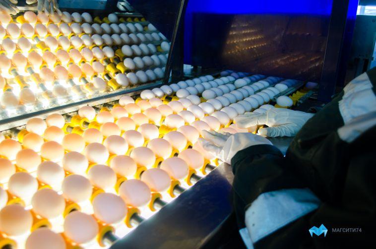 Магнитогорскую птицефабрику наказали за неприятный запах