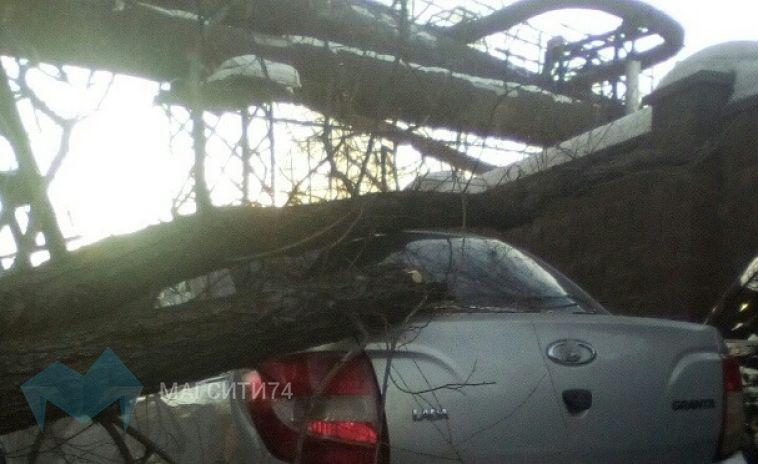 Дерево упало на припаркованный автомобиль