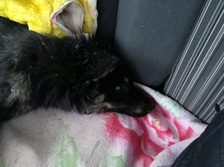 В Магнитогорске неизвестный зверски уничтожает бездомных собак