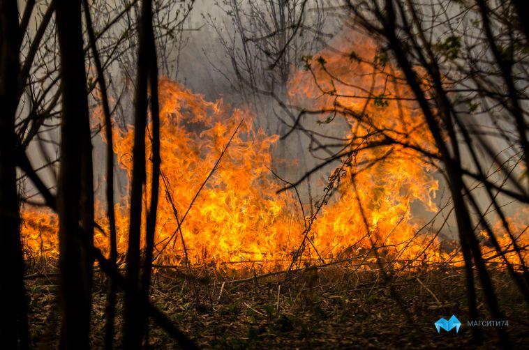 Огонь уничтожил десятки гектаров травы в окрестностях Магнитогорска