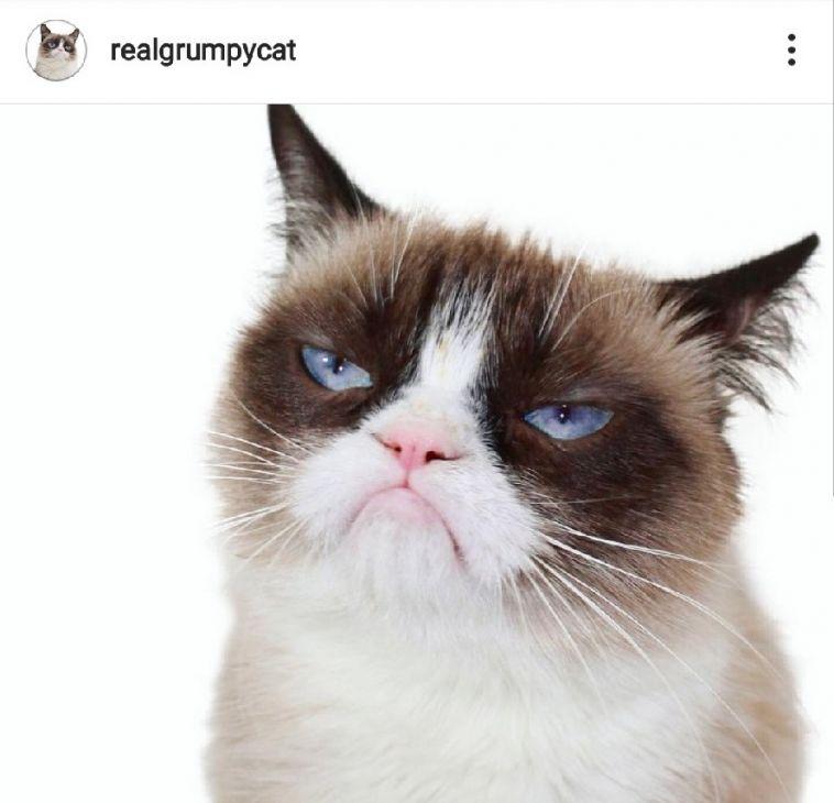 Умерла известная на весь мир «Сердитая кошка»