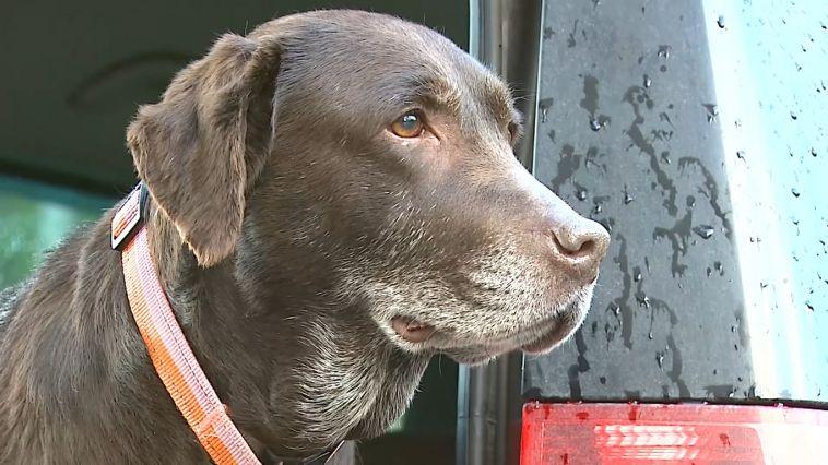 Мужчина нашел пропавшую собаку спустя три года