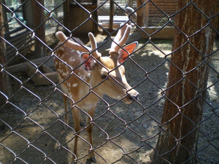 В Магнитогорске осудили браконьера, застрелившего косулю