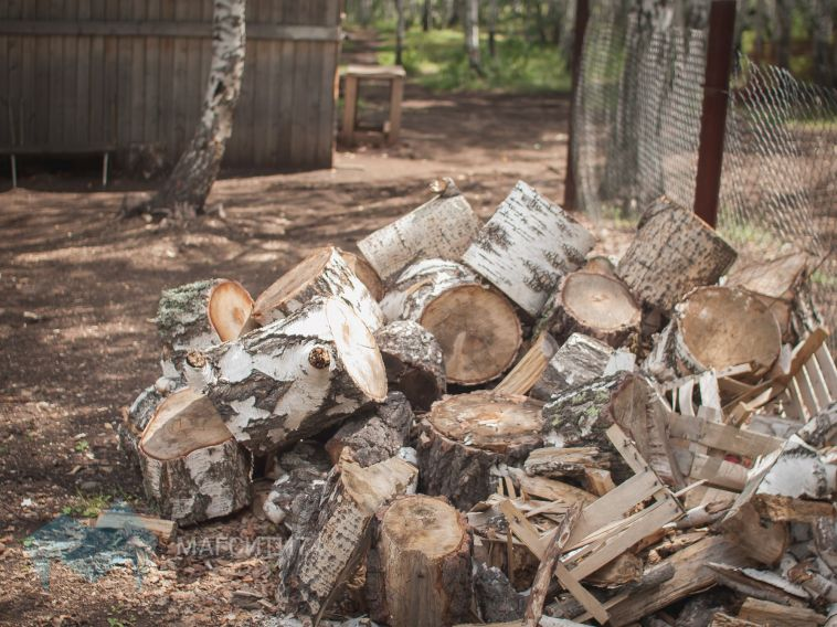 Сергей Бердников: «Вместо каждого пня посадим живое дерево»