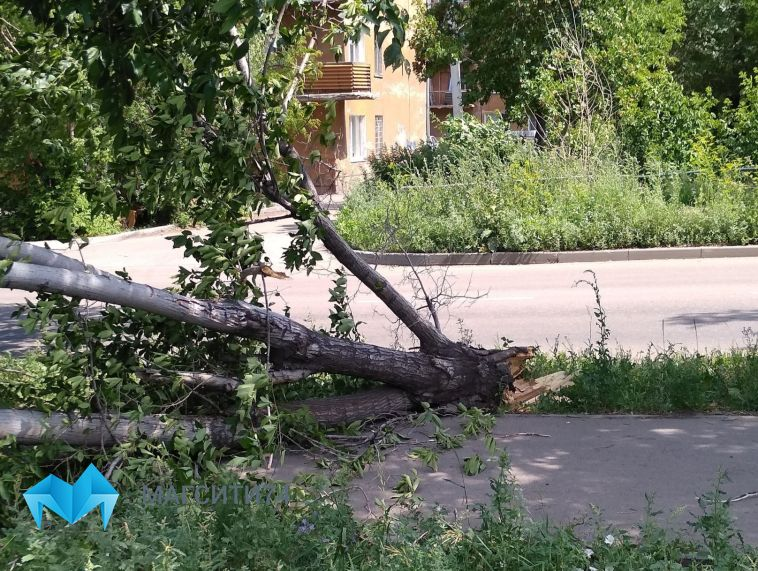 Ветер повалил деревья в разных районах города