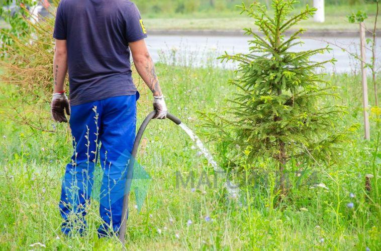 В городе высадят более полутора тысяч деревьев