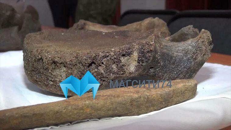 На Южном Урале обнаружили останки предка мамонта
