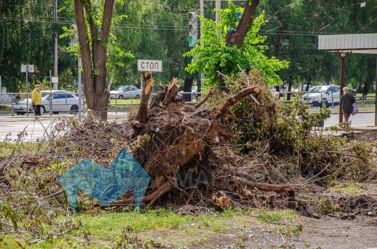 Магнитогорцев возмутила вырубка деревьев вдоль будущего бульвара