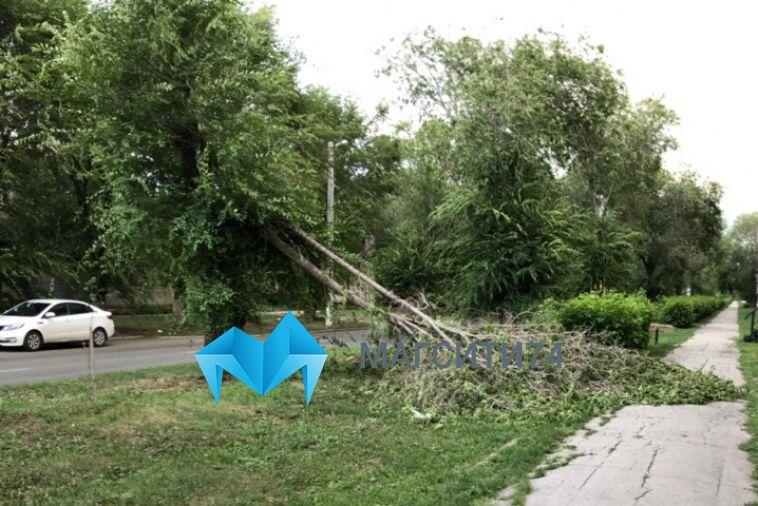 Сильный ветер поломал деревья в разных районах города