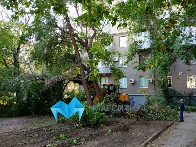 Кому-то сирень, акому-то парковка: наЛенинградской вырубили зеленую аллею ради новой стоянки