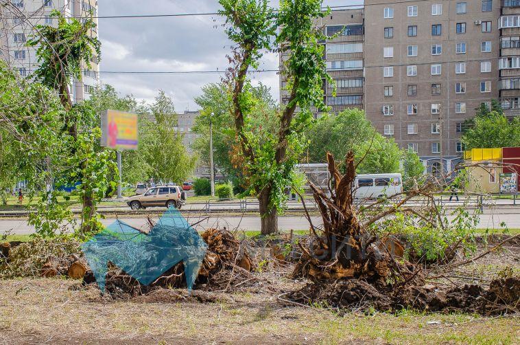 За неделю в Магнитке срубили больше сотни деревьев