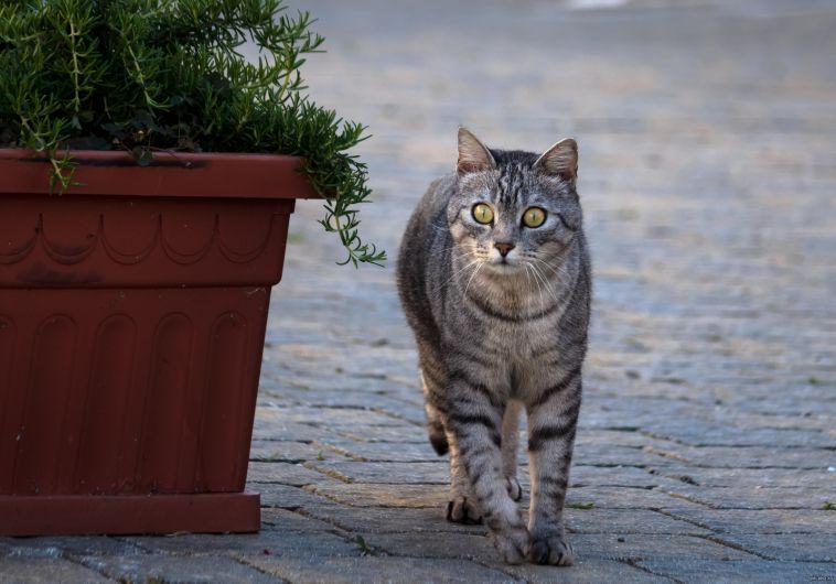 Кошка и высокоскоростной Интернет. Без чего невозможно жить в частном доме?