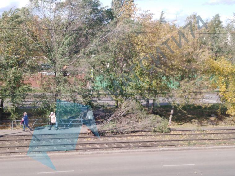 В Магнитогорске на пятилетнего ребенка упала массивная ветка дерева