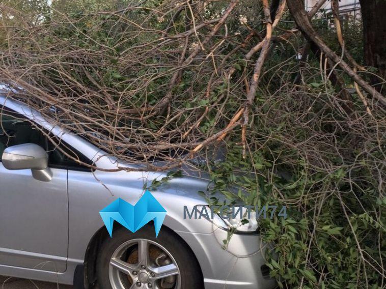 Около двухсот упавших деревьев: в администрации обсудили последствия шторма