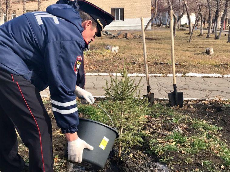 Сотрудники ГИБДД посадили ели на территории магнитогорских школ