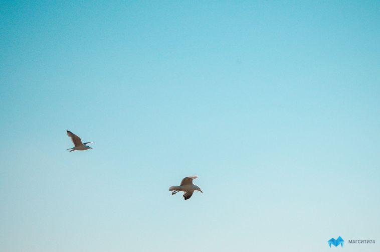 Магнитогорцев предупредили овспышке птичьего гриппа
