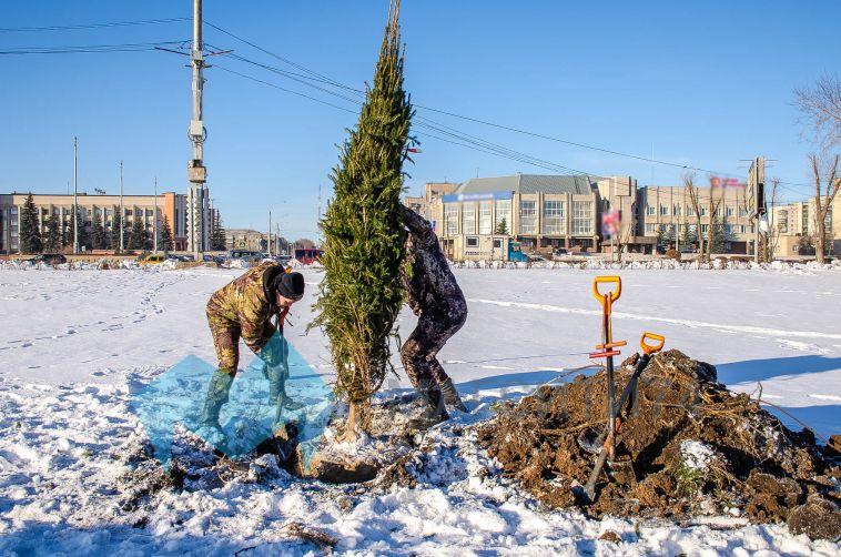 Несмотря наснег имороз, вМагнитогорске завершается высадка деревьев