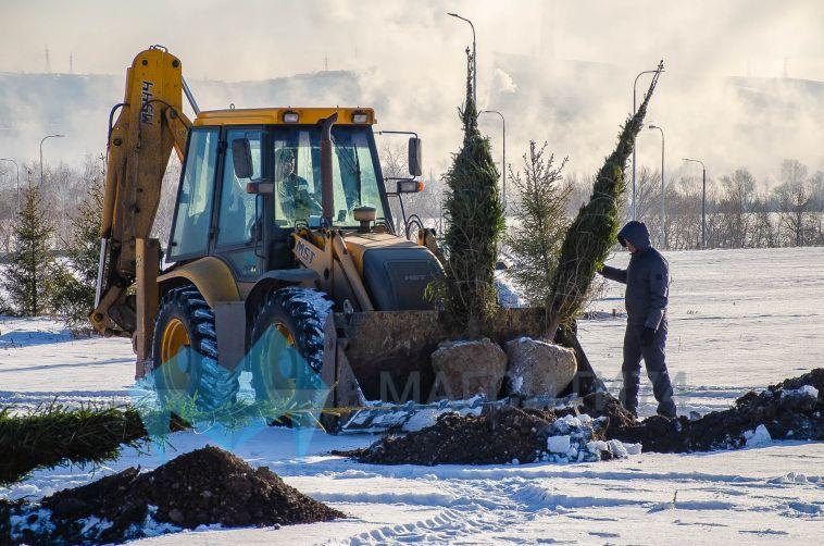 Магнитогорцам предлагают выбрать деревья для парков искверов