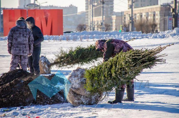 За год в Магнитогорске появилось более 30 тысяч деревьев и кустарников