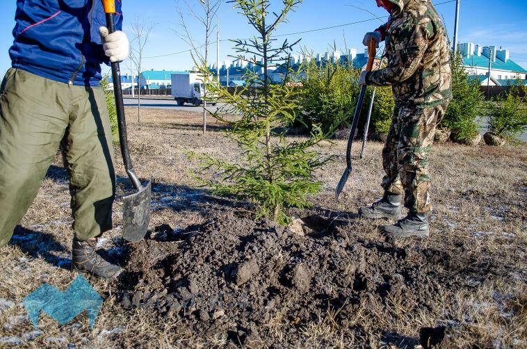 Магнитогорские парки искверы пополнились тысячами деревьев икустарниками